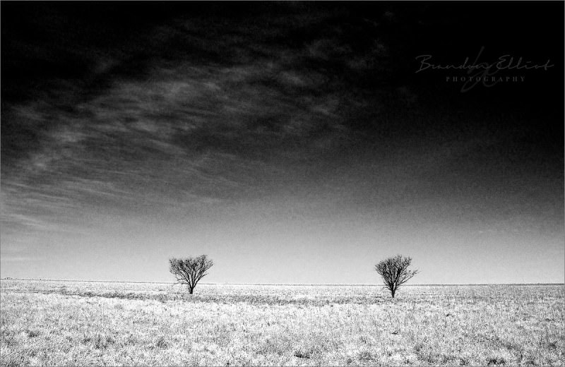 2 tress in outback australia. Vancouver Photographer Brandon Elliot