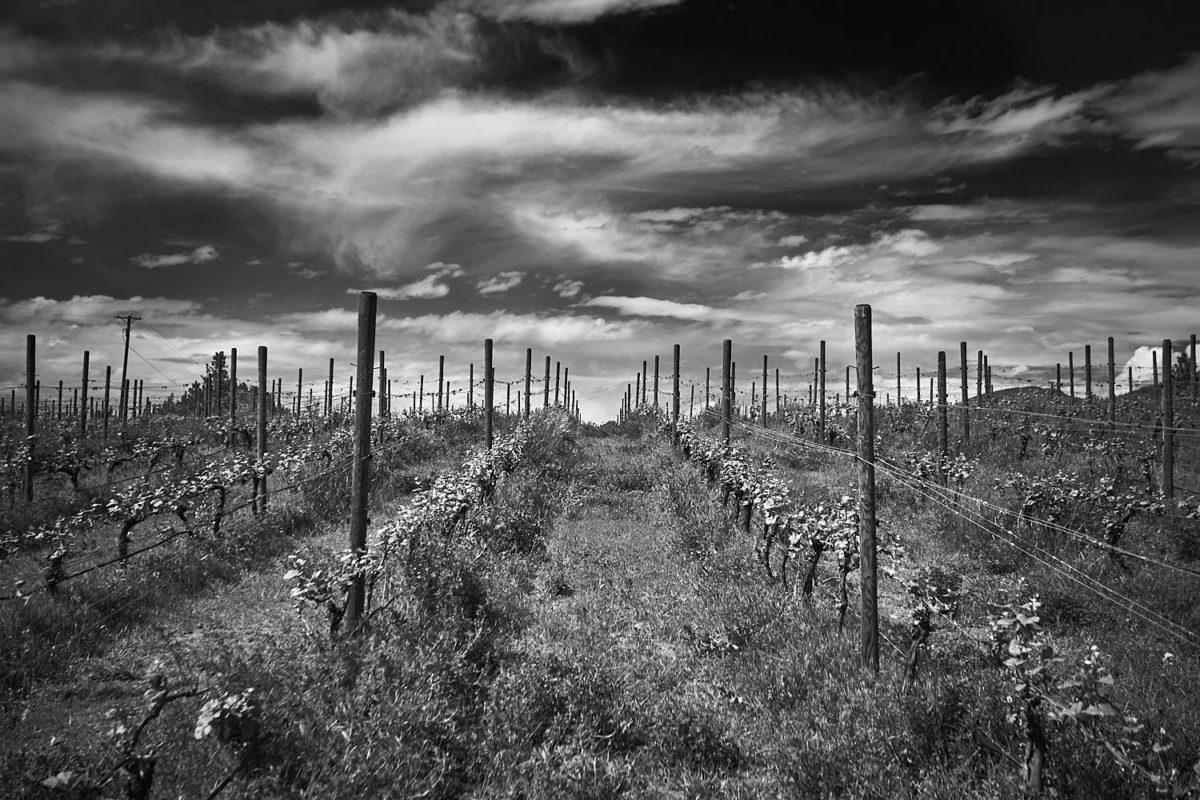 penticton photographer of winery syncromesh vineyards